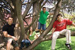 Photo of students sitting in a tree. Link to Life Stage Gift Planner Over Age 70 Situations.